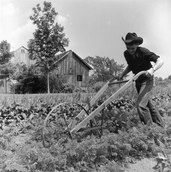 Carrot「Farmer Ted」:写真・画像(12)[壁紙.com]