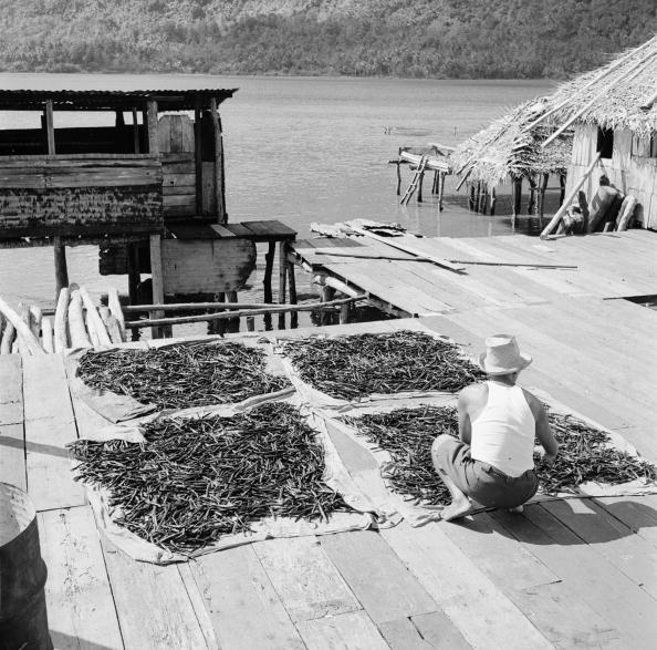 Vanilla「Haapu Dock」:写真・画像(0)[壁紙.com]