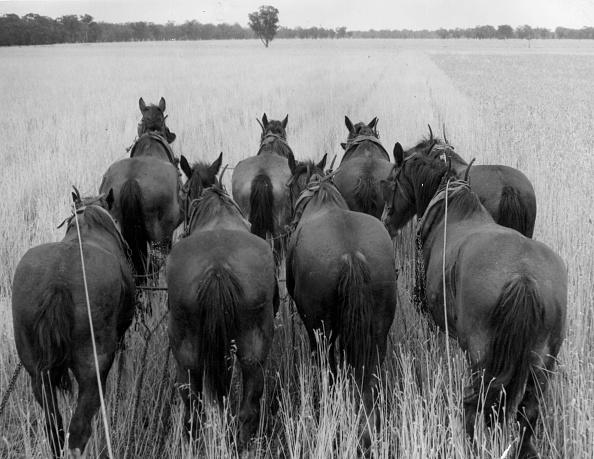 動物「Eight Horse Power」:写真・画像(18)[壁紙.com]