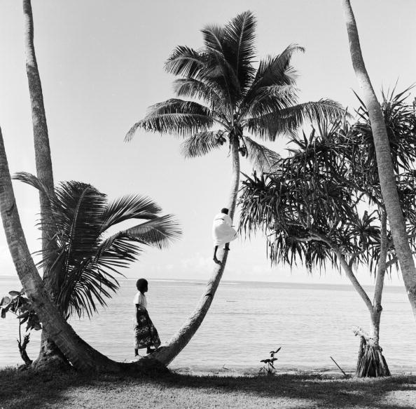 Tropical Climate「Climbing For Coconuts」:写真・画像(12)[壁紙.com]