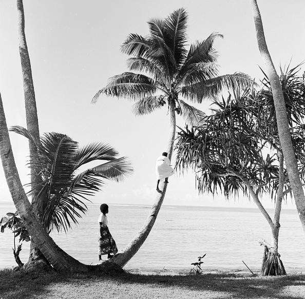 南国「Climbing For Coconuts」:写真・画像(2)[壁紙.com]