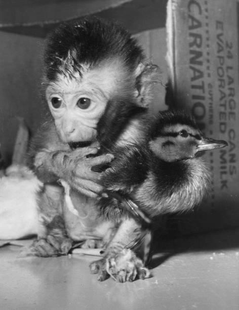 Monkey Duck:ニュース(壁紙.com)