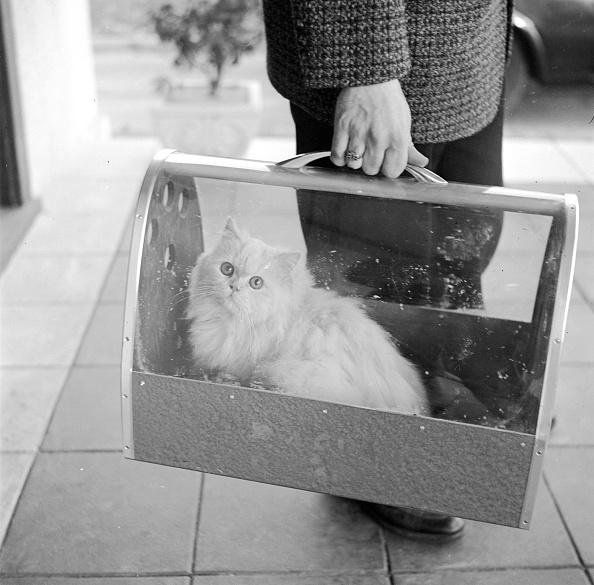 動物「Portable Puss」:写真・画像(4)[壁紙.com]