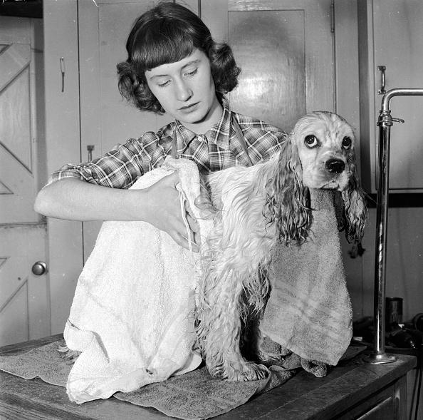 Domestic Animals「Dog's Bathtime」:写真・画像(13)[壁紙.com]