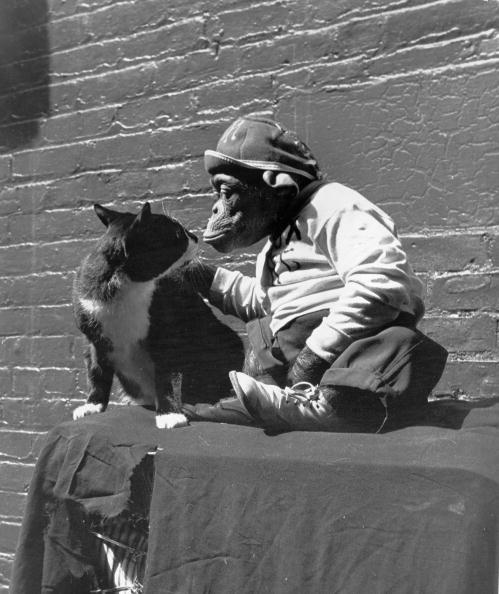 animal「Animal Friends」:写真・画像(18)[壁紙.com]