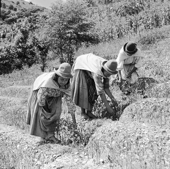葉・植物「Coca Harvest」:写真・画像(1)[壁紙.com]