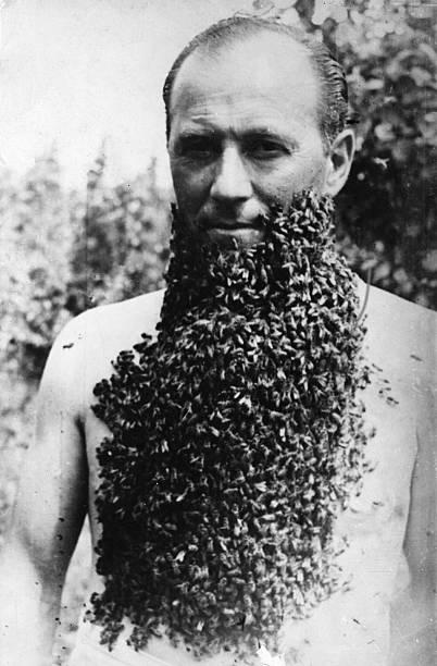 Bee Beard:ニュース(壁紙.com)