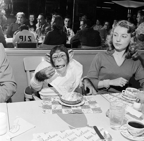 Eating「Dining Chimp」:写真・画像(1)[壁紙.com]