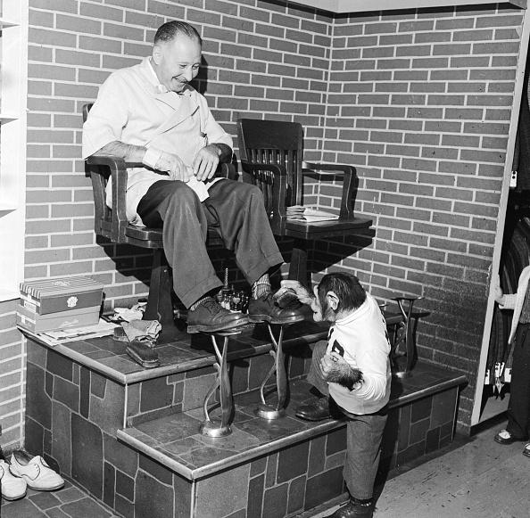 Shoe「Shoeshine Chimp」:写真・画像(6)[壁紙.com]