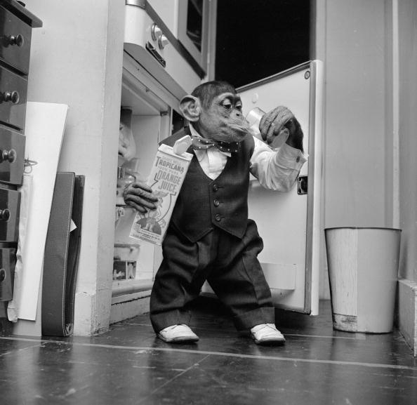 Empty「Thirsty Monkey」:写真・画像(4)[壁紙.com]