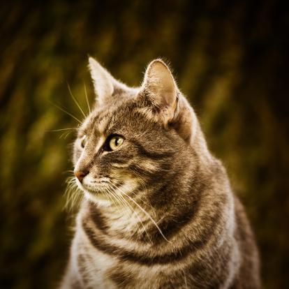 Mixed-Breed Cat「Close-up portrait of a cute cat」:スマホ壁紙(8)