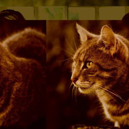 Mixed-Breed Cat「Close-up portrait of a cute cat」:スマホ壁紙(7)