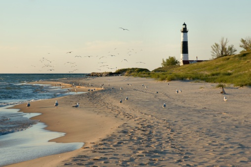 Seagull「Big Sable Point Lighthouse with Gulls」:スマホ壁紙(17)
