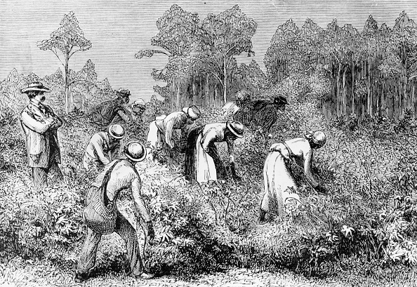 Southern USA「Cotton Picking」:写真・画像(7)[壁紙.com]