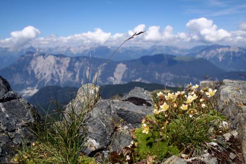 Solden「Plants in the mountains」:スマホ壁紙(12)