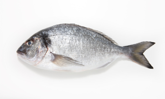 人物「Sea Bream on a white background」:スマホ壁紙(5)