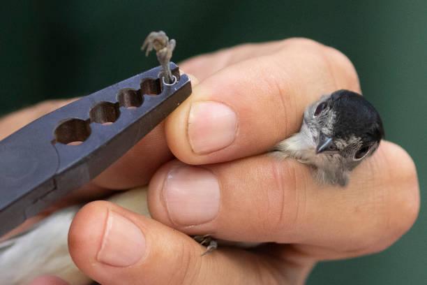 Birds Are Ringed At Start Of Autumn Migration:ニュース(壁紙.com)