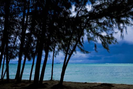 Northern Mariana Islands「Trees on beach, Saipan Island, USA」:スマホ壁紙(17)