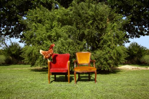 Hen「Chicken on theatre  chairs in open field」:スマホ壁紙(18)