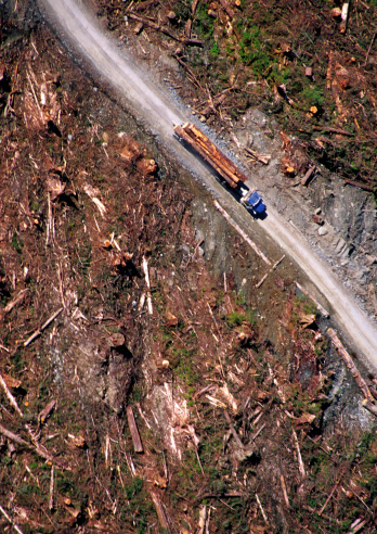 Deforestation「Logging truck driving down road in clear cut forest, overhead view」:スマホ壁紙(13)