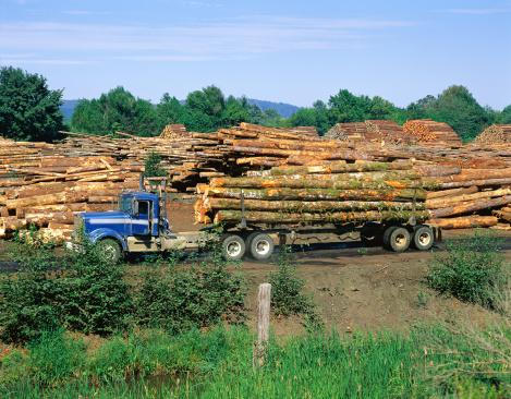 Deforestation「Logging truck surrounded by cut timber」:スマホ壁紙(10)