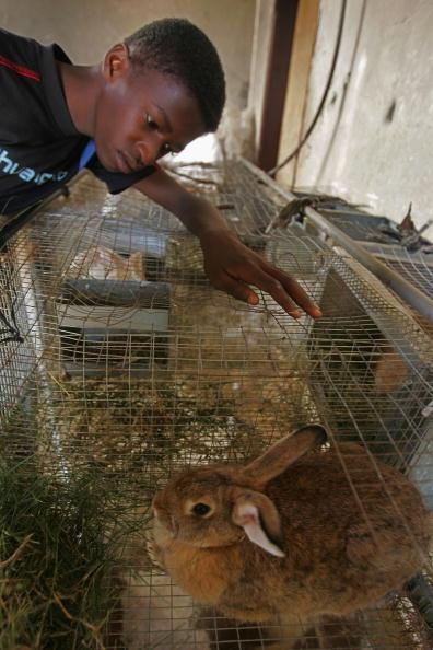 Animal Eye「Aid Groups Help Palestinians Weather Economic Crisis」:写真・画像(17)[壁紙.com]