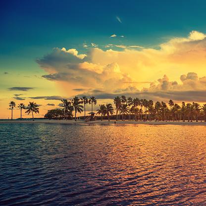 Miami「beach miami」:スマホ壁紙(13)