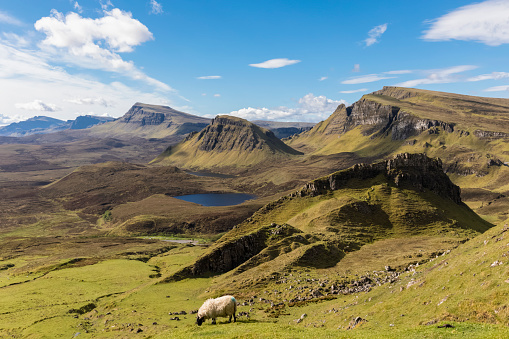 Sheep「UK, Scotland, Inner Hebrides, Isle of Skye, Trotternish, Quiraing, view towards Loch Cleat」:スマホ壁紙(8)