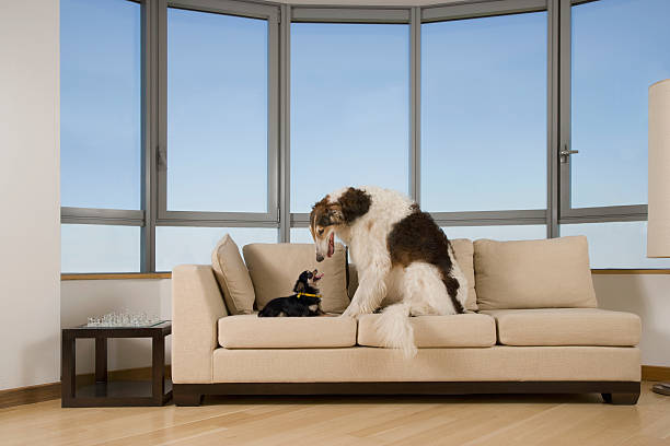 Big dog looking at little dog on couch in living room:スマホ壁紙(壁紙.com)