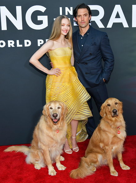 "Amanda Seyfried「Premiere Of 20th Century Fox's ""The Art Of Racing In The Rain"" - Red Carpet」:写真・画像(9)[壁紙.com]"