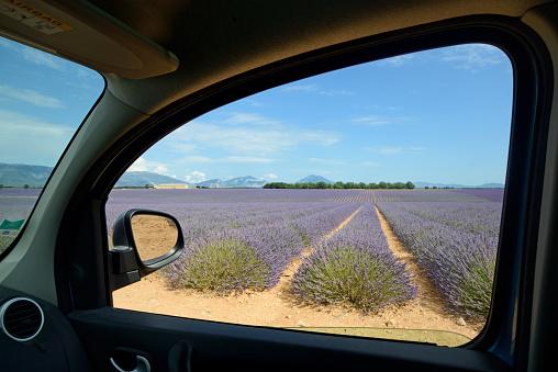Alpes-de-Haute-Provence「Lavender Fields Valensole Plateau Provence」:スマホ壁紙(19)