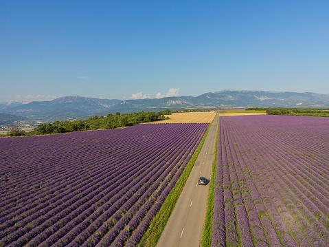 France「Lavender field around Valensole」:スマホ壁紙(14)