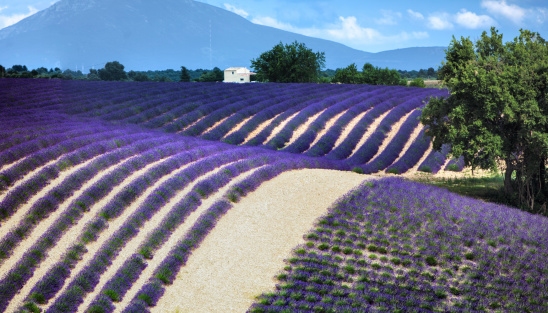 France「Lavender field panorama」:スマホ壁紙(14)