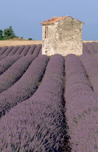 French Lavender「Lavender Field and Old Stone Farmhouse」:スマホ壁紙(13)