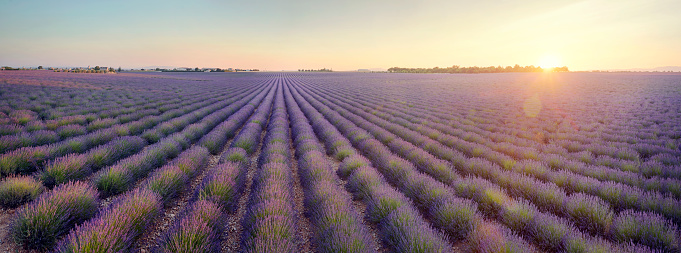 French Lavender「Lavender field at sunrise in Provence, France」:スマホ壁紙(18)