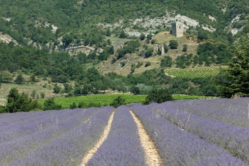 French Lavender「Lavender field with castle」:スマホ壁紙(1)