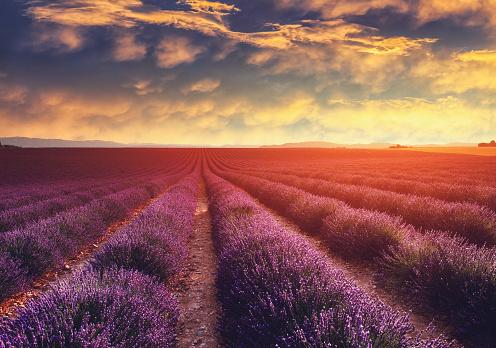 France「Lavender field at sunset in Provence, France」:スマホ壁紙(8)