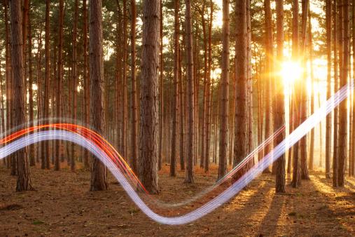 Efficiency「Light swoosh in woods.」:スマホ壁紙(17)