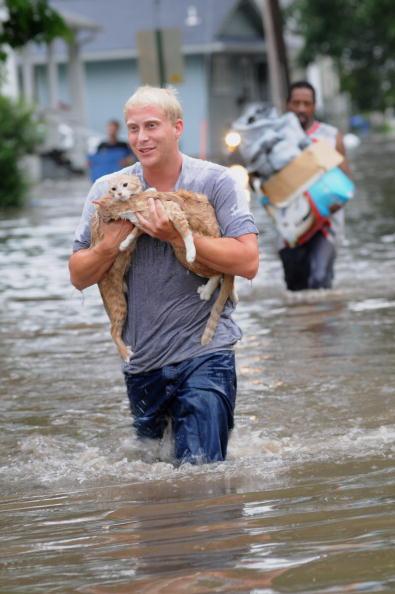 猫「Iowa Faces Next Round Of Flooding」:写真・画像(10)[壁紙.com]