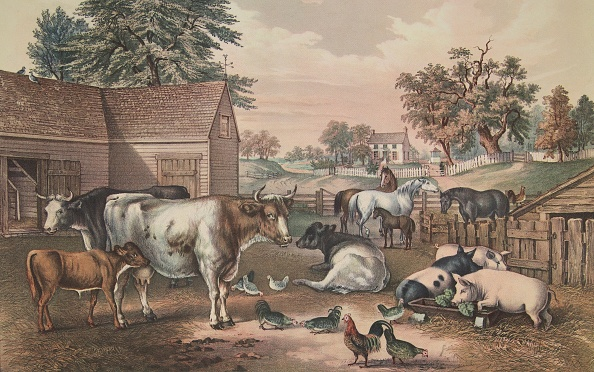 動物「American Farm Yard - Evening」:写真・画像(13)[壁紙.com]