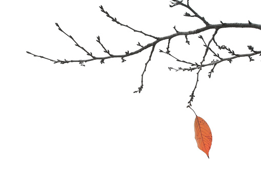 Bare Tree「End Of Autumn - Final Leaf on a Branch」:スマホ壁紙(6)
