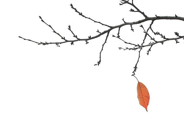 End Of Autumn - Final Leaf on a Branch:スマホ壁紙(壁紙.com)