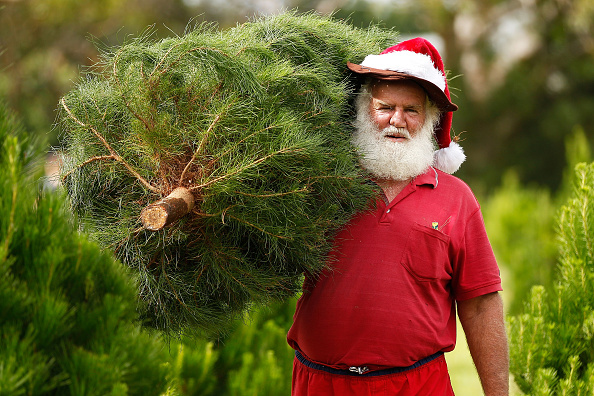 Christmas「Sydneysiders Head To Sydney Christmas Tree Farm」:写真・画像(0)[壁紙.com]