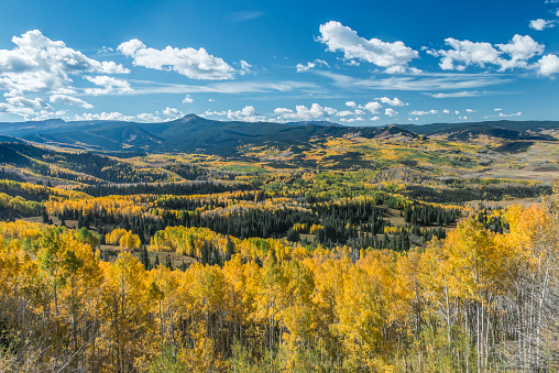Aspen Tree「Flat Tops Wilderness Area, Routt National Forest, Colorado, USA」:スマホ壁紙(1)
