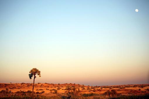月「Palmwag 夕暮れの景観-ナンビアアフリカ」:スマホ壁紙(8)
