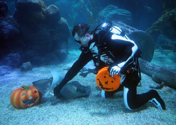 Sea Life「SeaLife Celebrates Halloween」:写真・画像(3)[壁紙.com]