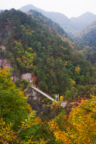 Nikko City「Suspension bridge over Seto aikyo ravine in autumn, Nikko city, Tochigi Prefecture, Honshu, Japan」:スマホ壁紙(12)