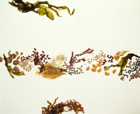 Algae「Seaweed with tofu and legumes」:スマホ壁紙(2)