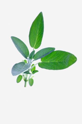 Sagebrush「Sage」:スマホ壁紙(1)