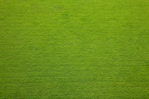芝生「草」:スマホ壁紙(17)